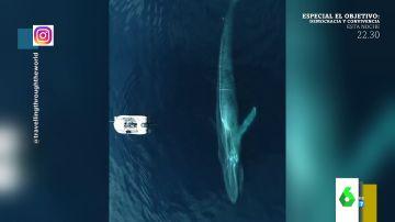 El impactante vídeo que muestra una enorme ballena frente a un barco pesquero a vista de pájaro
