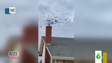 Pájaros invaden una vivienda
