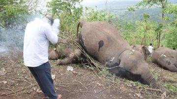 18 elefantes muertos por una tormenta eléctrica en La India