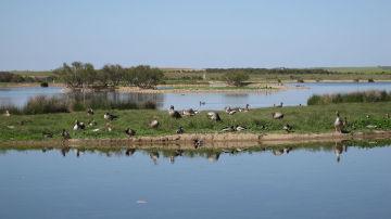Lagunas de Villafáfila