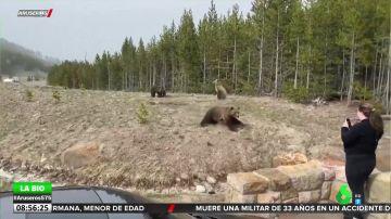 Un oso se abalanza sobre una turista al sentir que se acercaba demasiado a sus crías