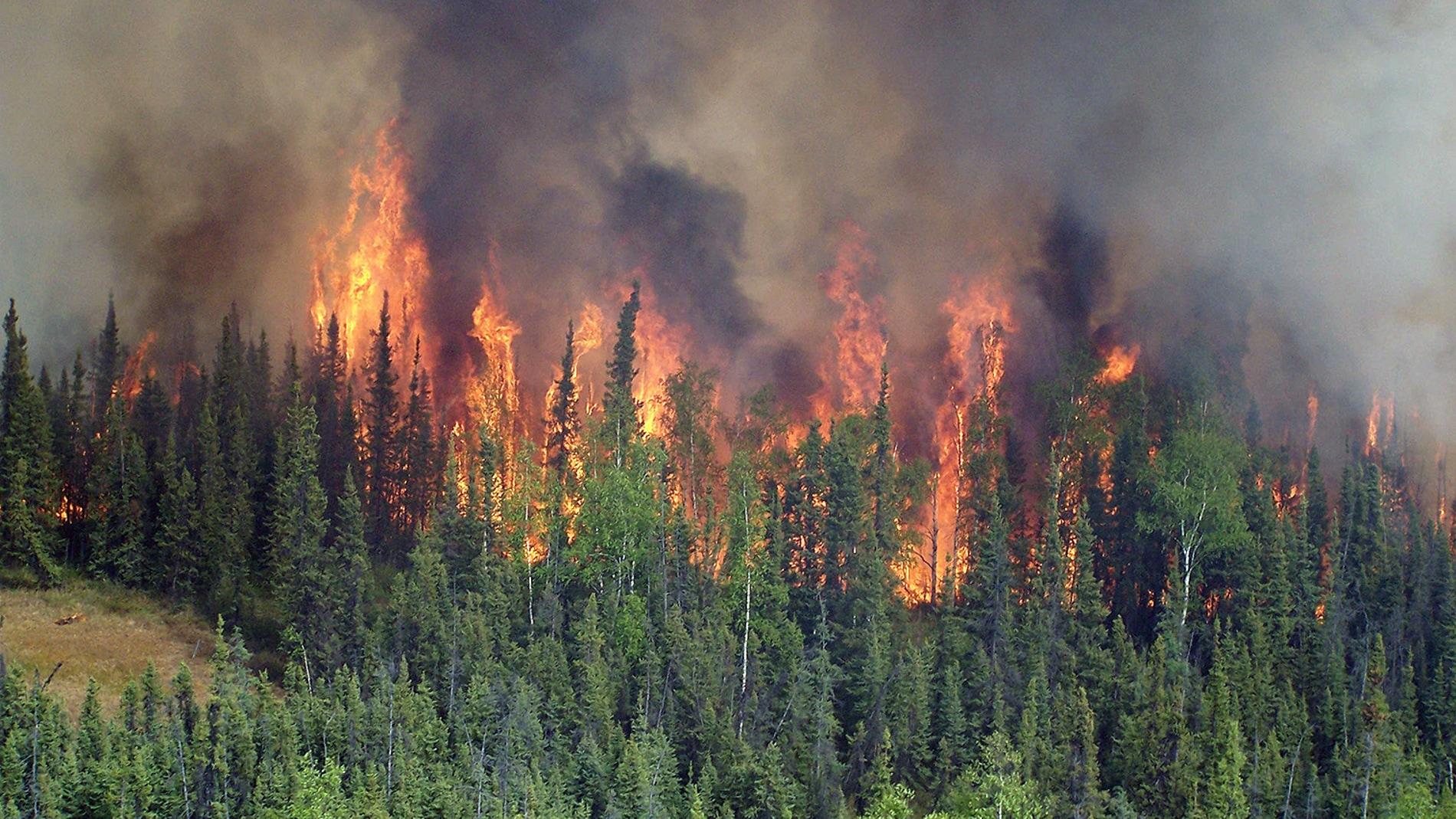Incendio forestal en un bosque boreal de Alaska