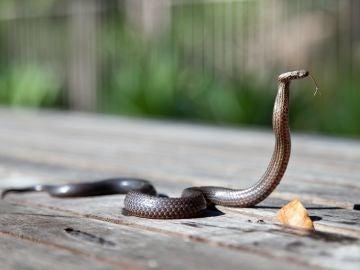 Qué significa soñar con serpientes