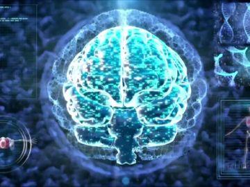 Nuestro cerebro tiene más cosas en común con los testículos de lo que imaginábamos