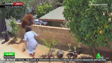 Una mujer se enfrenta a un oso para defender a sus perros
