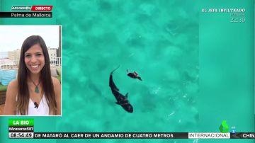 El truco de una tortuga para evitar ser engullida por un tiburón