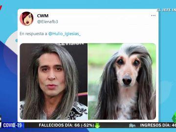 ¿A qué famosos se parecen estos perros? Twitter tiene la respuesta