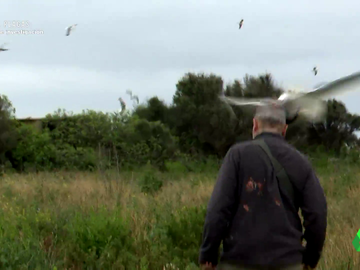El escatológico recibimiento de las gaviotas a un biólogo en Islas Medas