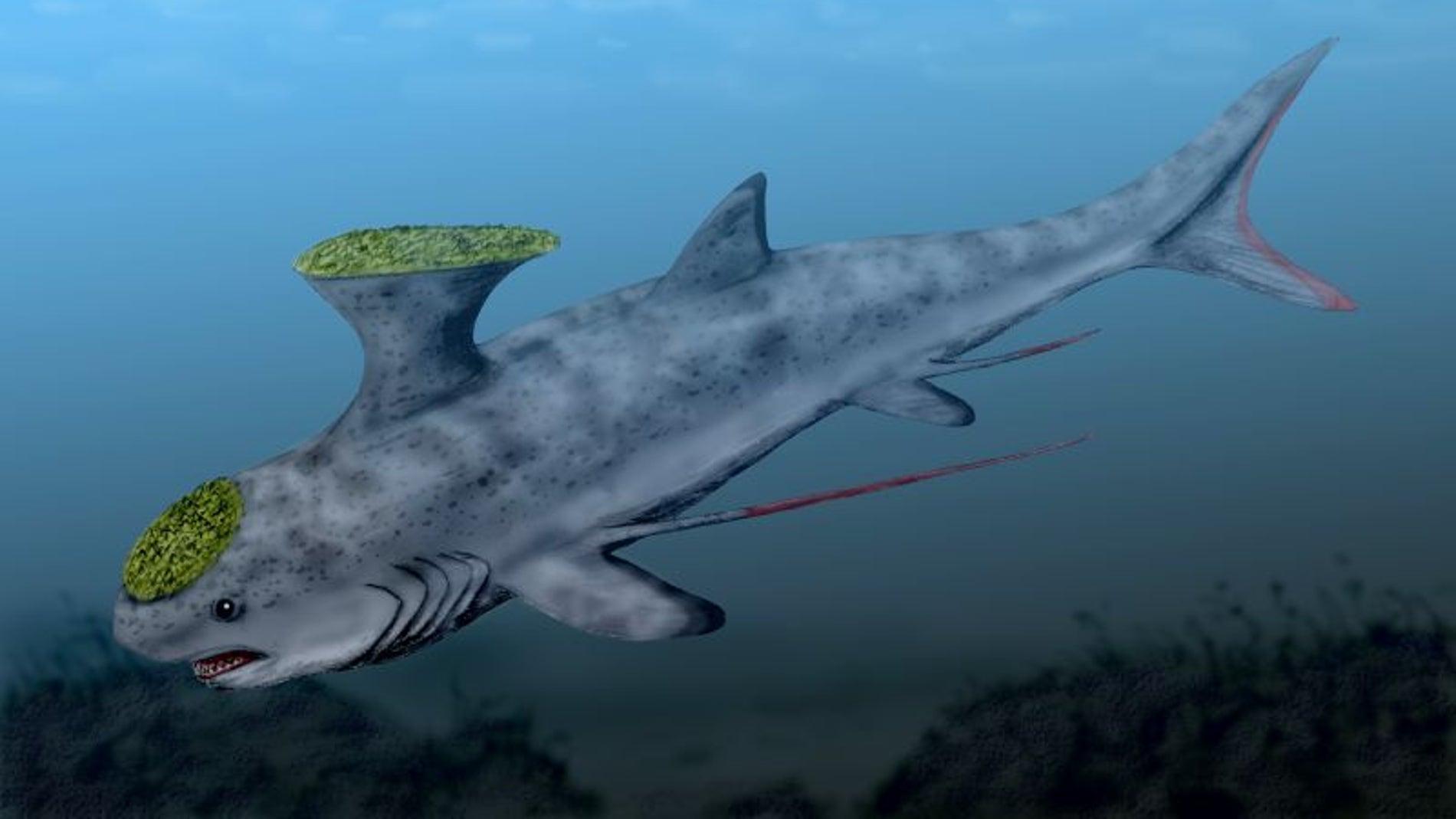 Tiburones eran los de antes