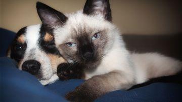 Tener un perro cuesta entre 510 y 3.410 euros anuales, y un gato, entre 975 y 1.650 euros