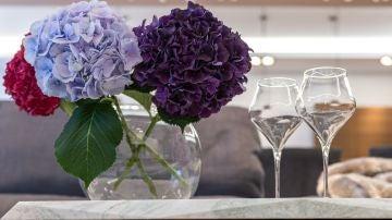 Cómo cultivar hortensias: guía de cuidados