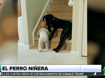 PERRO NINERA
