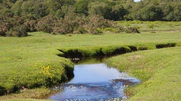 Imagen de archivo de un río en Reino Unido