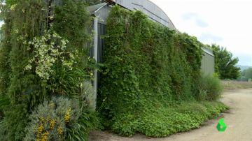 Muros vegetales, la alternativa para crear urbes sostenibles que empieza a llegar a España