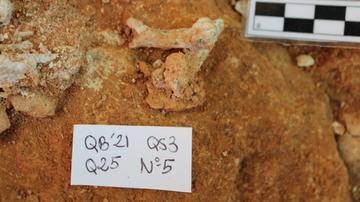 Hallan parte de un esqueleto de lince iberico de hace un millon de anos
