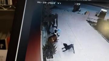 Brutal ataque de un perro a una niña de dos años en Murcia