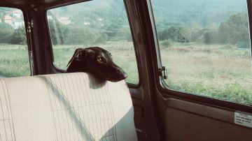 Deberíamos acostumbrar al perro a viajar en coche en distancias y tiempos más cortos.
