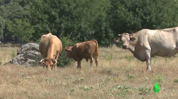 La ganadería extensiva, un modelo respetuoso con el entorno que ayuda a combatir la despoblación