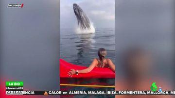 El susto de una piragüista al encontrarse con una ballena jorobada saltando a escasos metros de ella