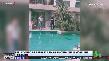 Un lagarto gigante se cuela en la piscina de un hotel