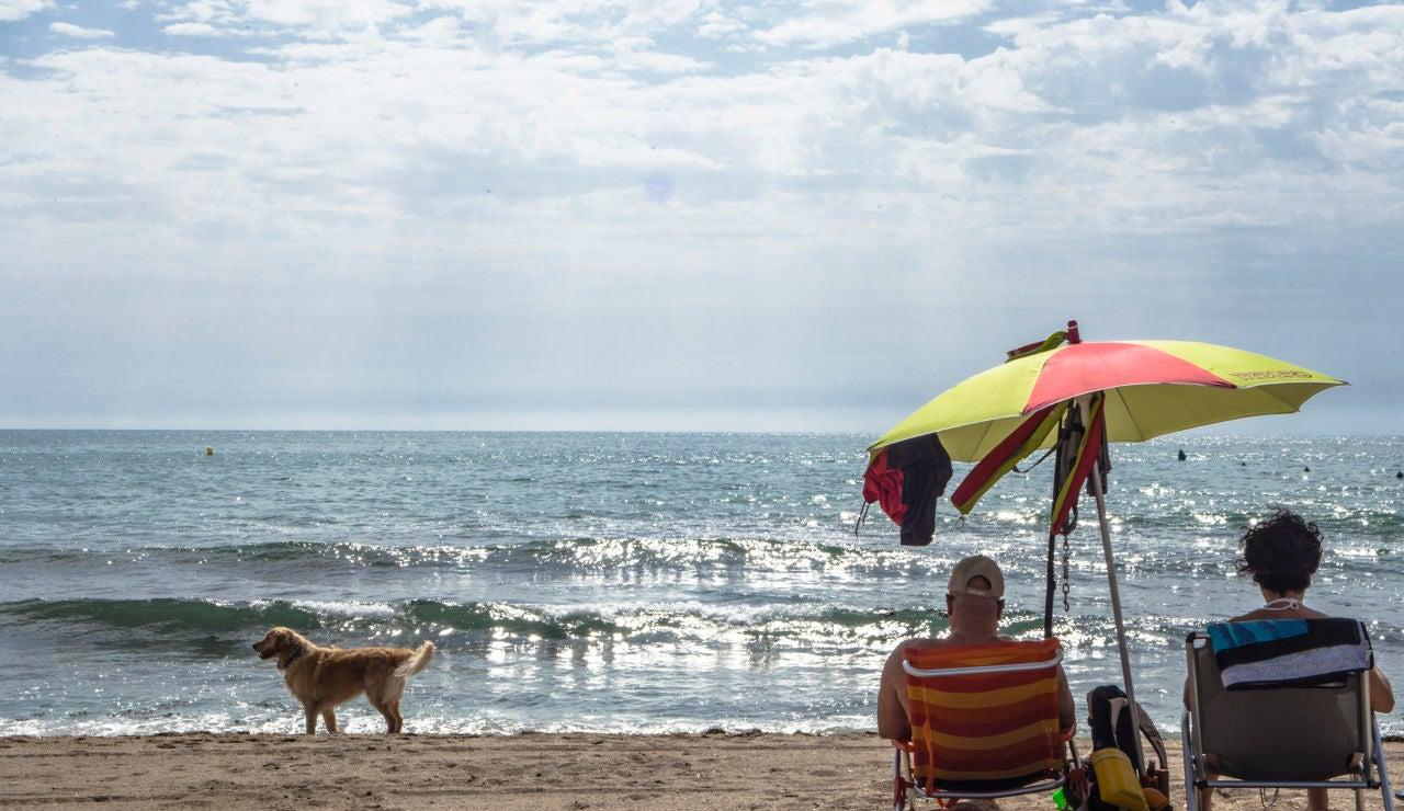 Playas Dog Friendly en Alicante