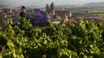 Quintas. Rioja Alavesa