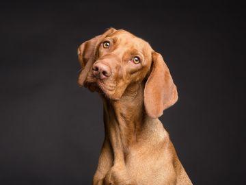 Una investigación señala que los perros pueden detectar las mentiras
