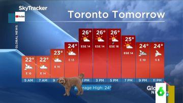 El perro de un hombre del tiempo se cuela en plena previsión meteorológica