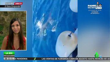 ¿Por qué las orcas están atacando a los barcos en la costa de Cádiz? Evelyn Segura da las claves