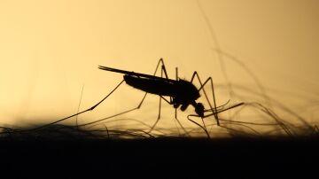 Plantas antimosquitos que funcionan