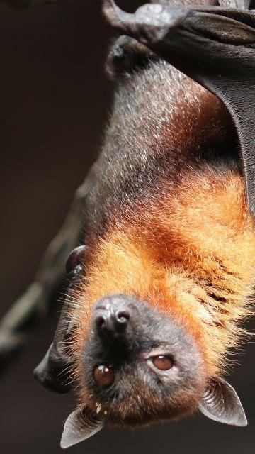 Científicos descubren un virus similar al SARS-CoV-2 en murciélagos de Laos