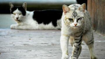 Cómo ahuyentar a los gatos de forma sutil