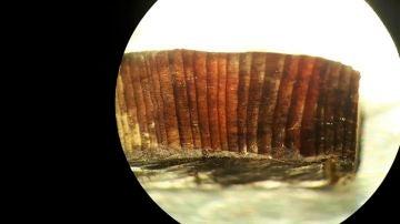 Imagen de microscopio de uno de los fragmentos de madera estudiados