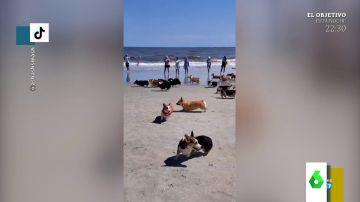 El hilarante caos de una carrera de perros en una playa de EEUU