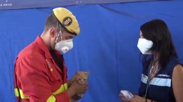 Un militar adopta al gato al que reanimó tras hallarlo asfixiado por cenizas en La Palma
