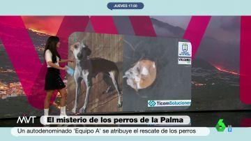 Esto es todo lo que se sabe de la misteriosa desaparición de los perros de La Palma