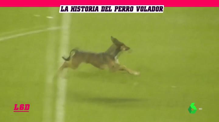 La Historia De Firulais El Perro Volador De Boca Juniors El Sigue A Los Bomberos