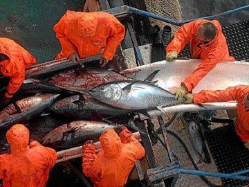 Pescadores de atún rojo