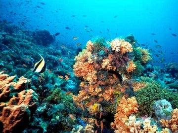 Corales del Caribe