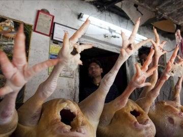 Sacrificio de pollos por gripe aviar
