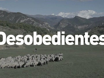 Desobedientes