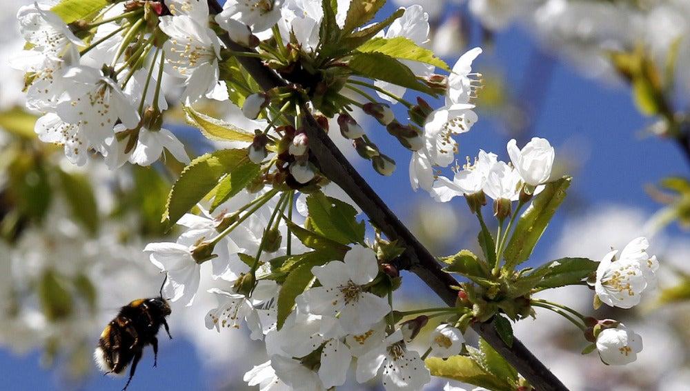 Comienza la primavera, pero el invierno se resiste a morir