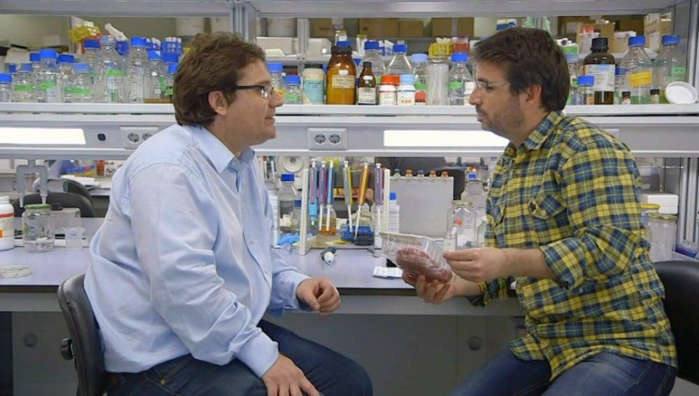 José Miguel Mulet, profesor de Biotecnología