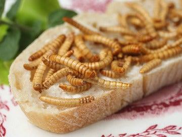 Insectos, una alternativa alimenticia a la carne, el pescado o la verdura