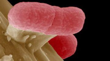 Juntos en la investigacuión de nuevos antibióticos contra bacterias resistentes