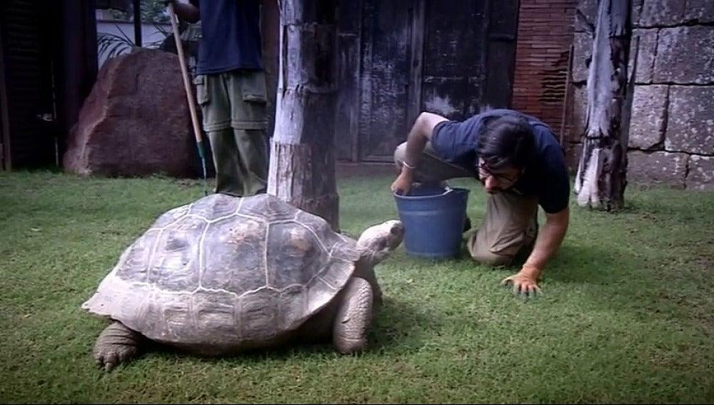 El Jefe de Bioparc con una tortuga