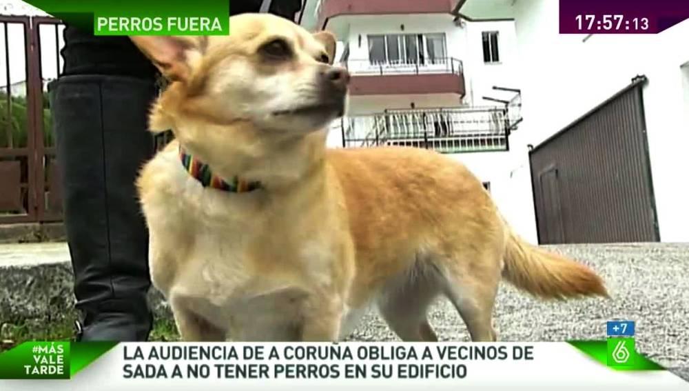 Un perro expulsado de un edificio