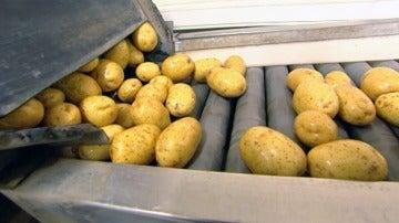 Las patatas de conservación, en 'El precio de los alimentos'