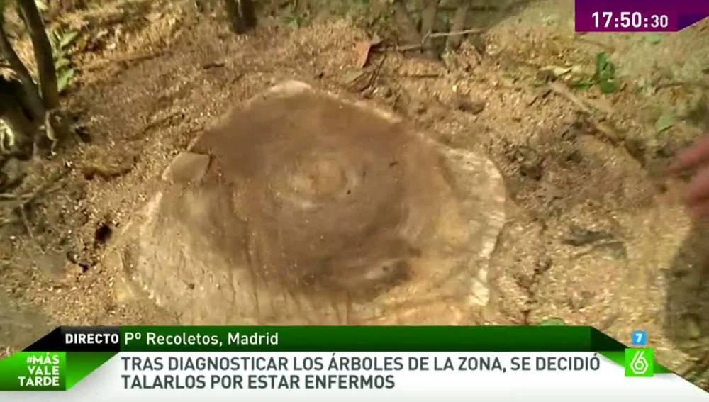 Tala masiva de árboles centenarios en la zona centro de Madrid