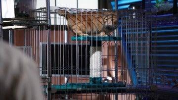 El gato de la víctima, clave para dar con el asesino de Randall Fairbanks